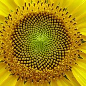 Patterns in Nature, Genes or Geometry?